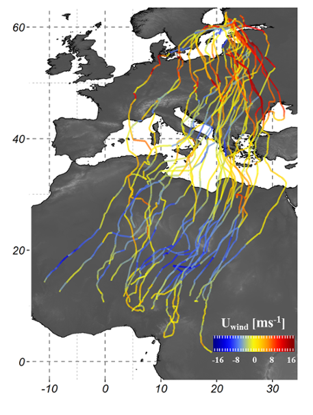Map showing aviary migration patterns. Blue lines show western winds, the red lines show eastern winds.