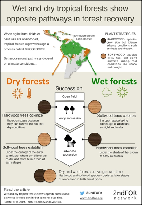 Infographic Wet and Dry forests