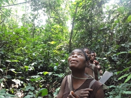 Mbendjele BaYaka woman inspecting a tree during a foraging trip with other women in the tropical rainforest of the Republic of Congo on a trail