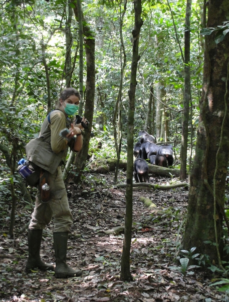 Karline Janmaat in the Tai forest searching for the target female, when the chimpanzee group was travelling on a research trail. Picture: Ammie Kalan.