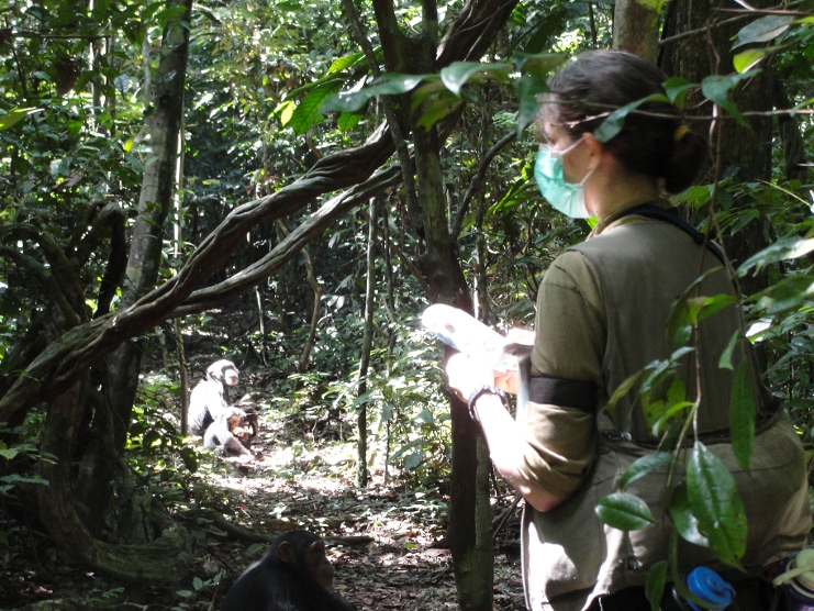 Karline Janmaat collecting data on the behaviour of one chimpanzee female using a voice recorder and GPS. Picture: Ammie Kalan