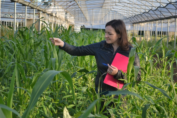 Mixed green manure species in Italian experimental site